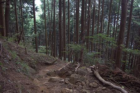 阿夫利神社から日向薬師へ 10