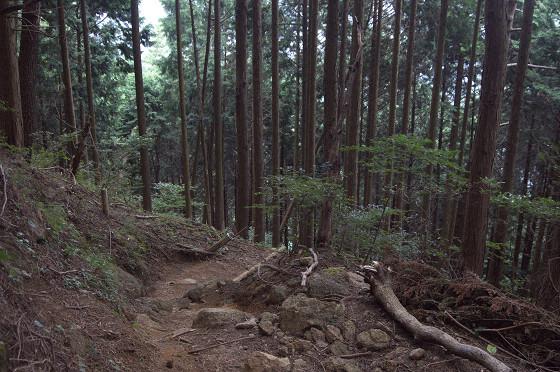 写真: 阿夫利神社から日向薬師へ 10