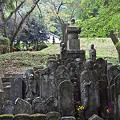 写真: 阿夫利神社から日向薬師へ 15