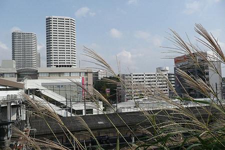 東戸塚駅のススキ