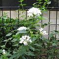 Photos: 晩秋の庭1