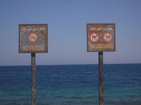馬とラクダ禁止の看板(ダハブ)