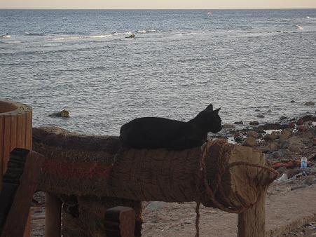 ダハブ 夕暮れの猫