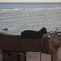写真: ダハブ 夕暮れの猫