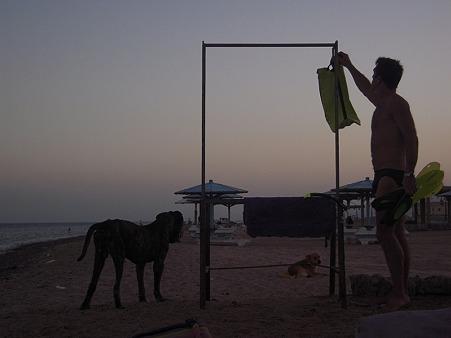 ダハブ 犬と男の夕暮れ