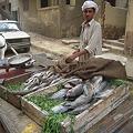 Photos: 魚売りの少年